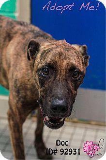 Camden, DE - Labrador Retriever/Greyhound Mix. Meet Doc, a dog for adoption. http://www.adoptapet.com/pet/11721551-camden-delaware-labrador-retriever-mix