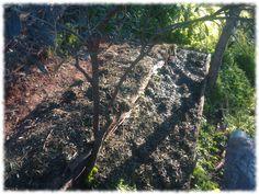 Aprovecho la pendiente para abancalar con el compostaje Fukuoka, Compost, Plantar, Harvest, Tree Planting, How To Build, Permaculture, Vegetable Garden, Flooring