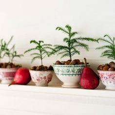 Use Mini Evergreens  Planted inside transferware bowls, a series of baby Norfolk Island pines brighten up a mantel. The idea also works for shelves, bookcases, or tabletops. Choose bowls in complementary colors or plain white, whichever best suits your existing holiday decor color scheme. Cover the dirt with nuts and acorns or with a collection of mini ornaments.