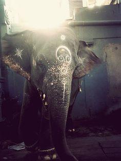 En la India tienen un dios que se llama ganesha, un dios con cabeza de elefante que representa el exito, la sabiduría y la riqueza...♧♧