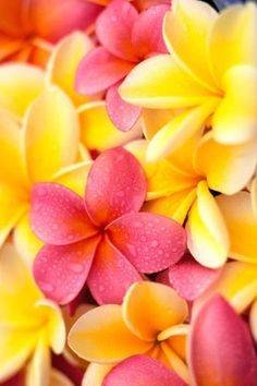 Pink, Yellow ~ tropical flowers