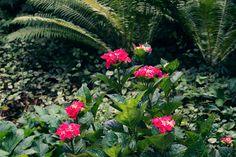 Park Seleger Moor, czyli czy warto zapłacić za kontakt z naturą? Switzerland, Park, Plants, Photography, Photograph, Fotografie, Parks, Photo Shoot, Planters