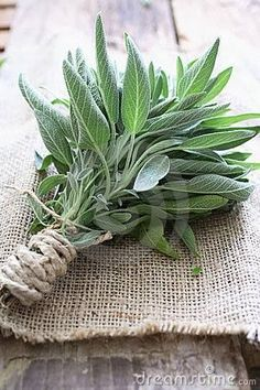 Sage in your campfire keeps away mosquitoes and bugs.