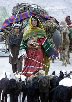 Afghan nomads in Pakistan travel back to Afghanistan...now I know what to wear if I ever herd sheep...I have never seen anyone look so good herding sheep...