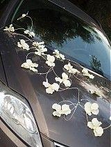Svadba - Výzdoba na auto z orchideí - 2729066