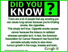 Cannabis slows down tumour growth in the lungs, breasts, and brain