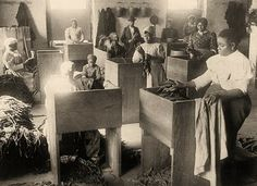 African Americans, mostly women] assorting tobacco at the T.B. Williams Tobacco Co., Richmond, Virginia 1890s