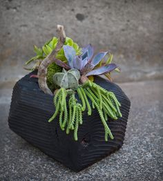 Faceted Geometric Wooden Beam Planter with Succulents