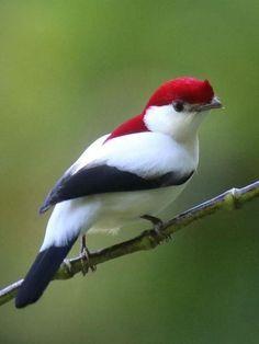 Most Beautiful Birds, Animals Beautiful, Cute Animals, Beautiful Wife, Cute Birds, Pretty Birds, Exotic Birds, Colorful Birds, Yellow Birds