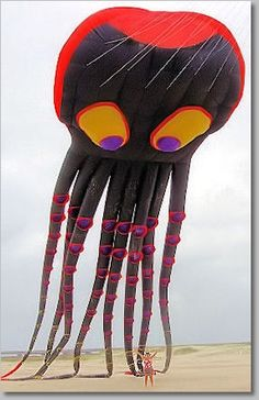 squid kite from what a kite