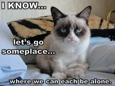 The collection of today are especially for you and Grumpy cat Lovers.These Grumpy cat Memes twinkle twinkle are so cute and as well as funny.Just read out these Grumpy cat Memes twinkle twinkle. Grumpy Cat Quotes, Grumpy Cat Humor, Cat Memes, Grumpy Kitty, Grump Cat, Grumpy Baby, Cat Cat, Cats Humor, Funny Shit