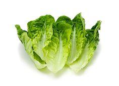 9. Cos Lettuce