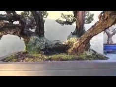 WORLD OF NATURE AND LIFE: BONSAI IN MAGIC LANDSCAPE AND IKEBANA SHOW
