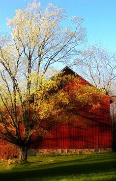 Red Barn & Tree