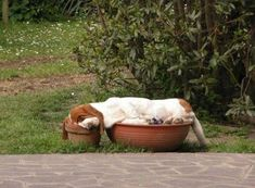 Silly me, I have been putting flowers in my planters.  This is a much better option.