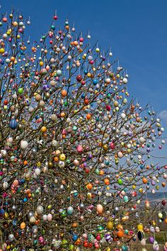 This is our famous Easteregg tree This year (2010): 9500 eggs. Visit for details. Dont miss out other images of the tree in my gallery.