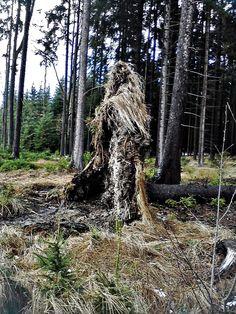 Die Waldhexe von Ulrike Frimpong