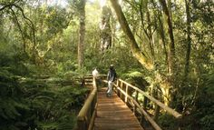 Hiking in the Knysna Forest Knysna, Great Places, Places To Visit, Amazing Places, Sa Tourism, Countries Of The World, Holiday Destinations, South Africa, The Good Place