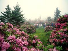 Spectacular Spring Wildflowers