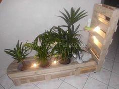 CIMG1050 600x450 Pallet vegetal furniture in pallet home decor pallet living room with pallet plant stand