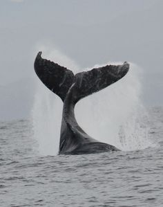 I would love to go on a whale watching trip!