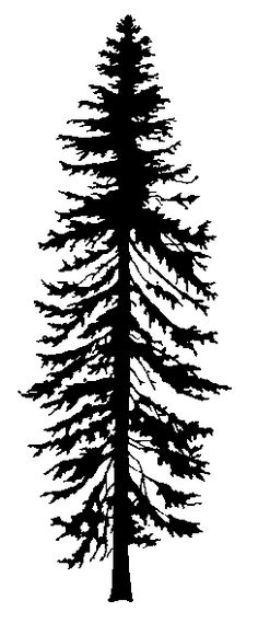 fir tree black and white – Bing Images - Modern Silhouette Tattoos, Silhouette Painting, Black Silhouette, Black And White Tree, Black And White Drawing, Grand Fir, Douglas Fir Tree, Cedar Trees, Tree Illustration