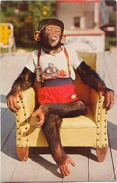 Happy Birthday Dressed Chimp in Armchair - Happy Birthday Funny - Funny Birthday meme - - Art Print: Happy Birthday Dressed Chimp in Armchair : The post Happy Birthday Dressed Chimp in Armchair appeared first on Gag Dad. Happy Birthday Funny, Happy Birthday Messages, Happy Birthday Quotes, Happy Birthday Images, Happy Birthday Greetings, Birthday Memes, Happy B Day, Monkeys, Art Print