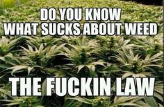 The only thing that's wrong about marijuana