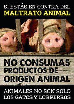 veganismo Going Vegetarian, Going Vegan, Vegan Vegetarian, Animals Of The World, Animals And Pets, Miss My Best Friend, Gato Animal, Vegan Memes, Why Vegan
