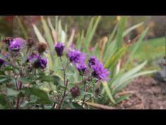 Rain Garden Step 4: Planting Native Plants