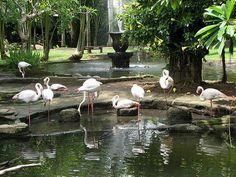 Bali Bird Park, Bali - Indonesia