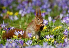 Vorfreude auf den Frühling. (Forum für Naturfotografen)