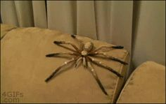 10. Las arañas nunca fallan.