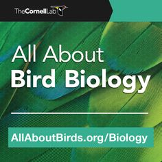 All About Bird Biology - The Cornell Lab of Ornithology