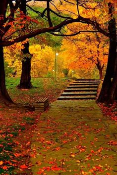 Gardening Autumn - Beautiful autumn - With the arrival of rains and falling temperatures autumn is a perfect opportunity to make new plantations Fall Pictures, Nature Pictures, Beautiful Places, Beautiful Pictures, Amazing Places, Image Nature, Autumn Scenes, Autumn Aesthetic, Autumn Photography