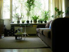 Living room front window