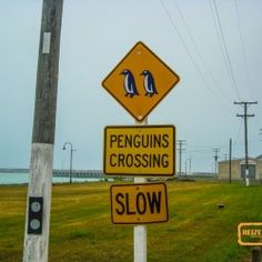Pinguins Crossing si