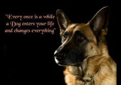german shepherd quote - Google Search
