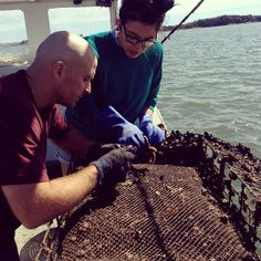Ok...just one more article about Bren Smith...Oyster Farming with Bren Smith of the Thimble Island Oyster Co.