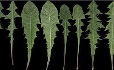 Toto je jedna z najliečivejších rastlín, ktorú všetci obchádzame. Teraz ju už nenecháte len tak na zemi - Báječný lekár
