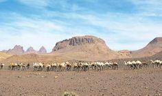 Image result for lieux visités algerie