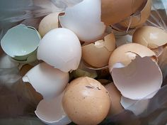 Use ground egg shells to stop blossom-end rot in tomatoes, peppers and zucchini.