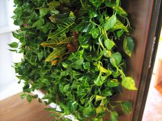 Green Walls @ Cabinet de Avocatura Green Walls, Cabinet, Plants, Clothes Stand, Closet, Cupboard, Planters, Plant, Planting