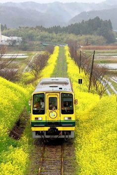 Isumi Line in Chiba, Japan いすみ鉄道 Beautiful World, Beautiful Places, Trains, Places To Travel, Places To Visit, Chiba Japan, Taj Mahal, S Bahn, Train Tracks