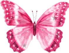 Pink Butterfly reverse photo