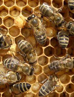 Colmeia de abelhas - estrutura e interdependência