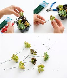 Summer Beauty: How to Make a Succulent Flower Crown via Brit + Co.