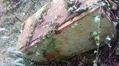 Il raggio riflesso: Discarica abusiva nei boschi della Sabina
