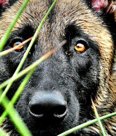 2 beautiful eyes of a faithful friend