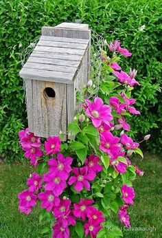 Clematis climbing a bluebird house on a post.  Good idea to wrap the post in chicken wire for support.